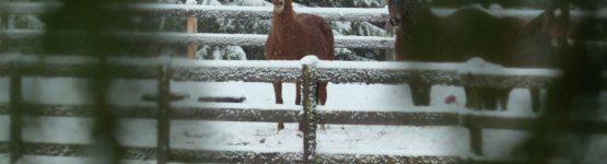 chevaux-neige