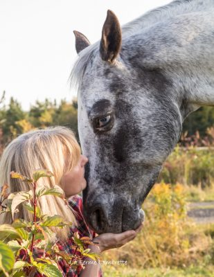 Connexion humain-cheval