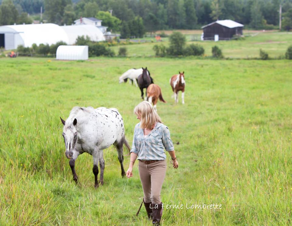 Harmonie humain et cheval